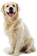 Pet Groomers in Danville - Image